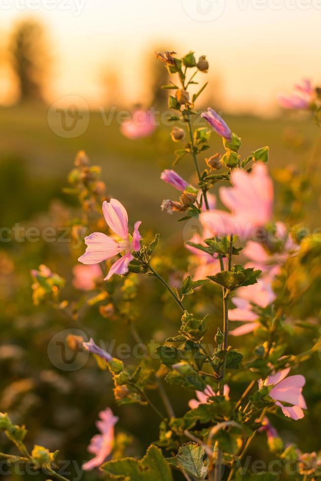 vilda blommor foto