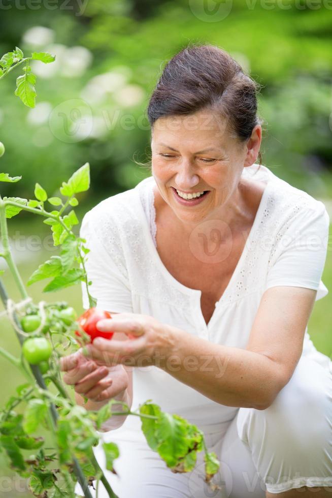 kvinna som plockar tomater i trädgården foto