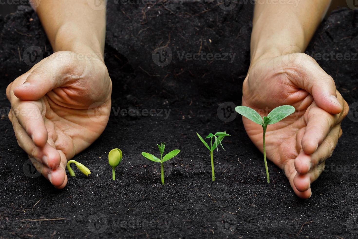 växande plantor foto