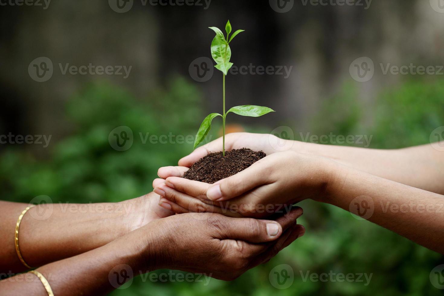 håller en växt mellan händerna foto