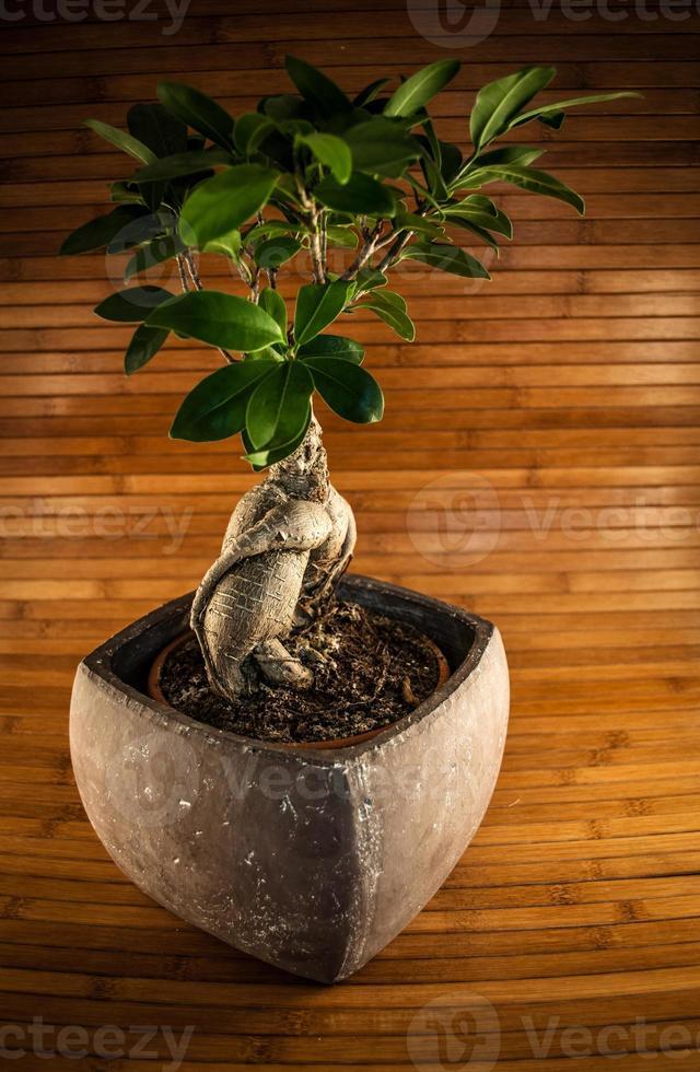 bansai träd foto