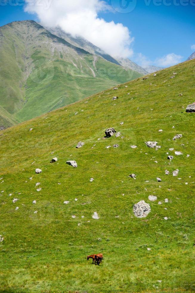 vandring i berg i Georgien foto