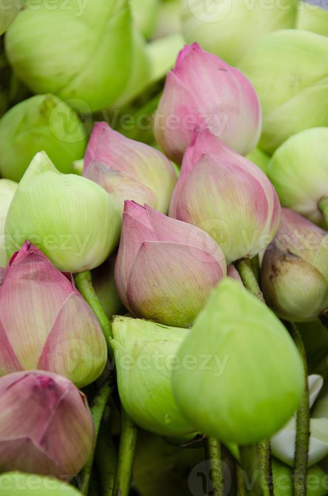 asiatisk rosa lotus foto