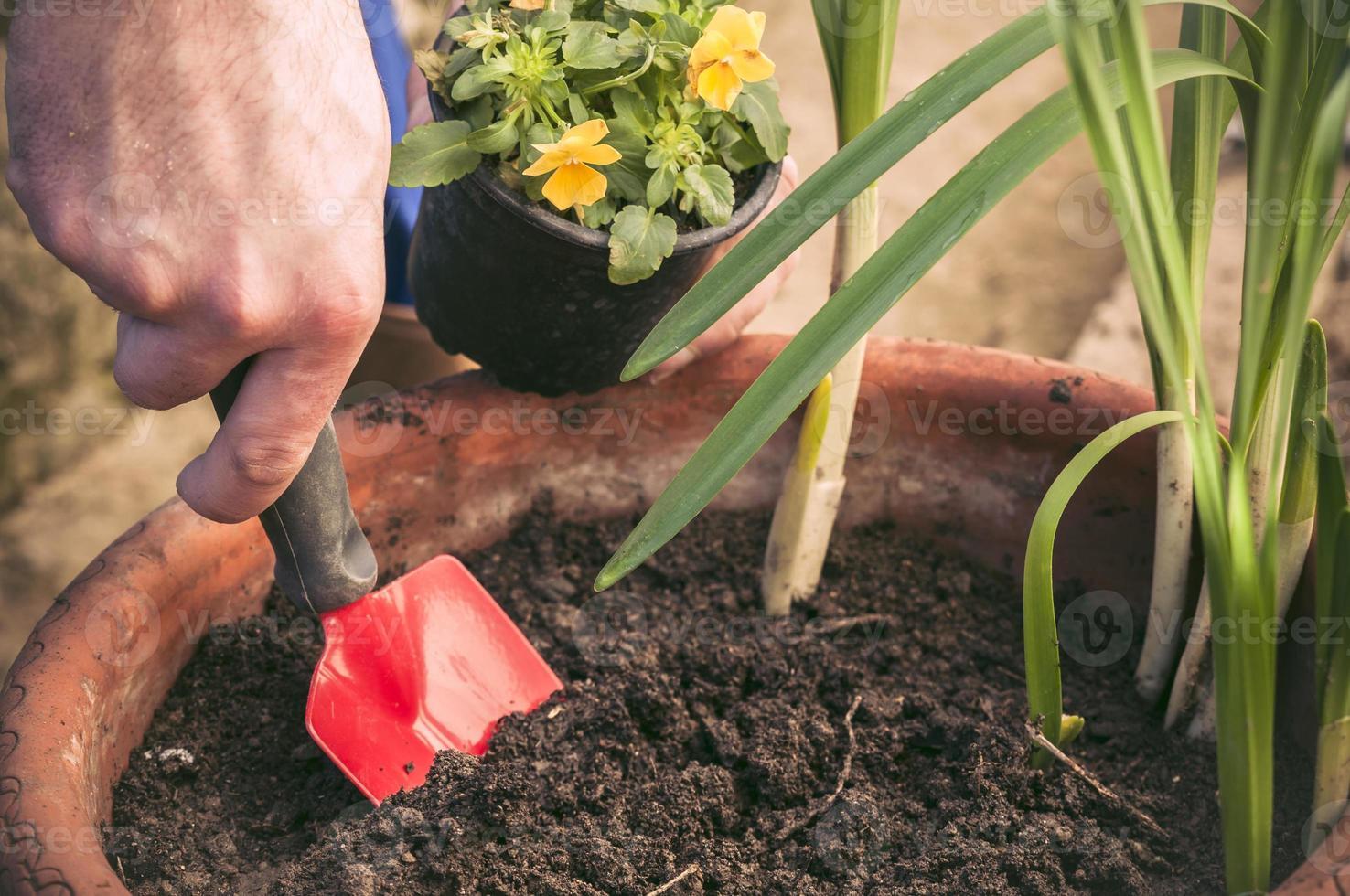 händer som planterar små blommor i en kruka foto