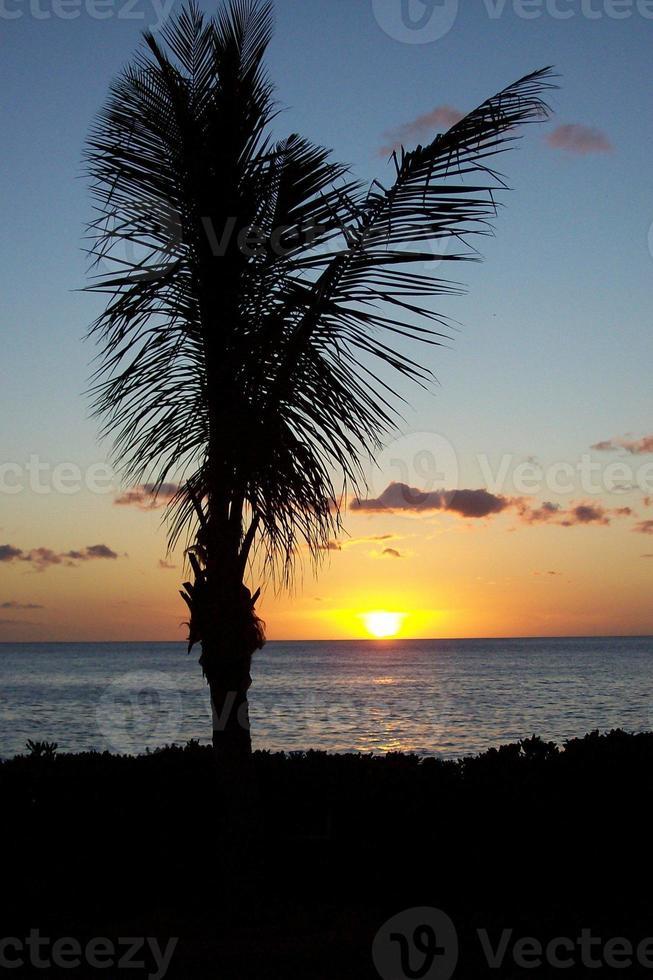 underbar solnedgång med en palmträdkontur foto