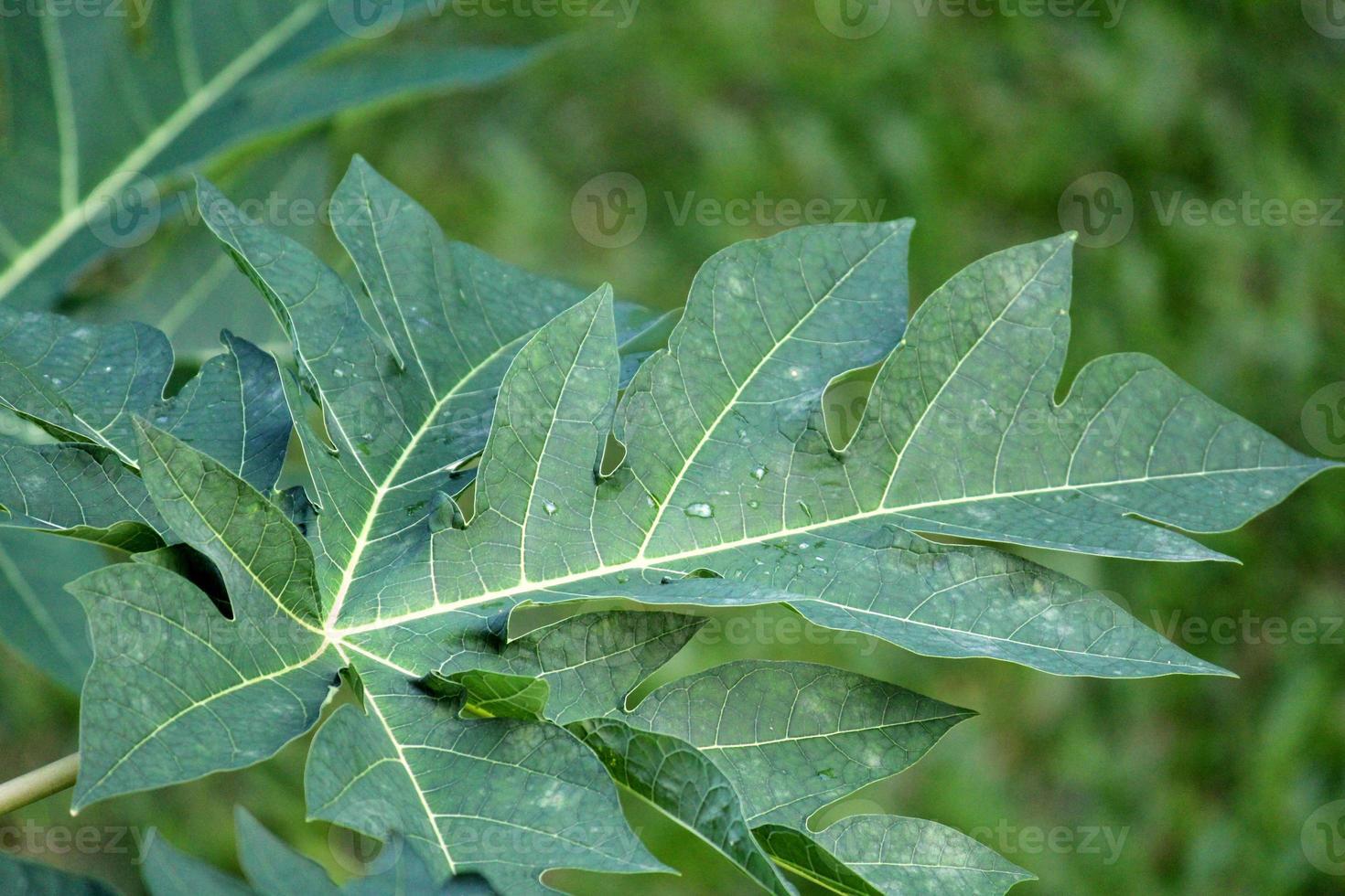 regndroppar på grönt blad foto
