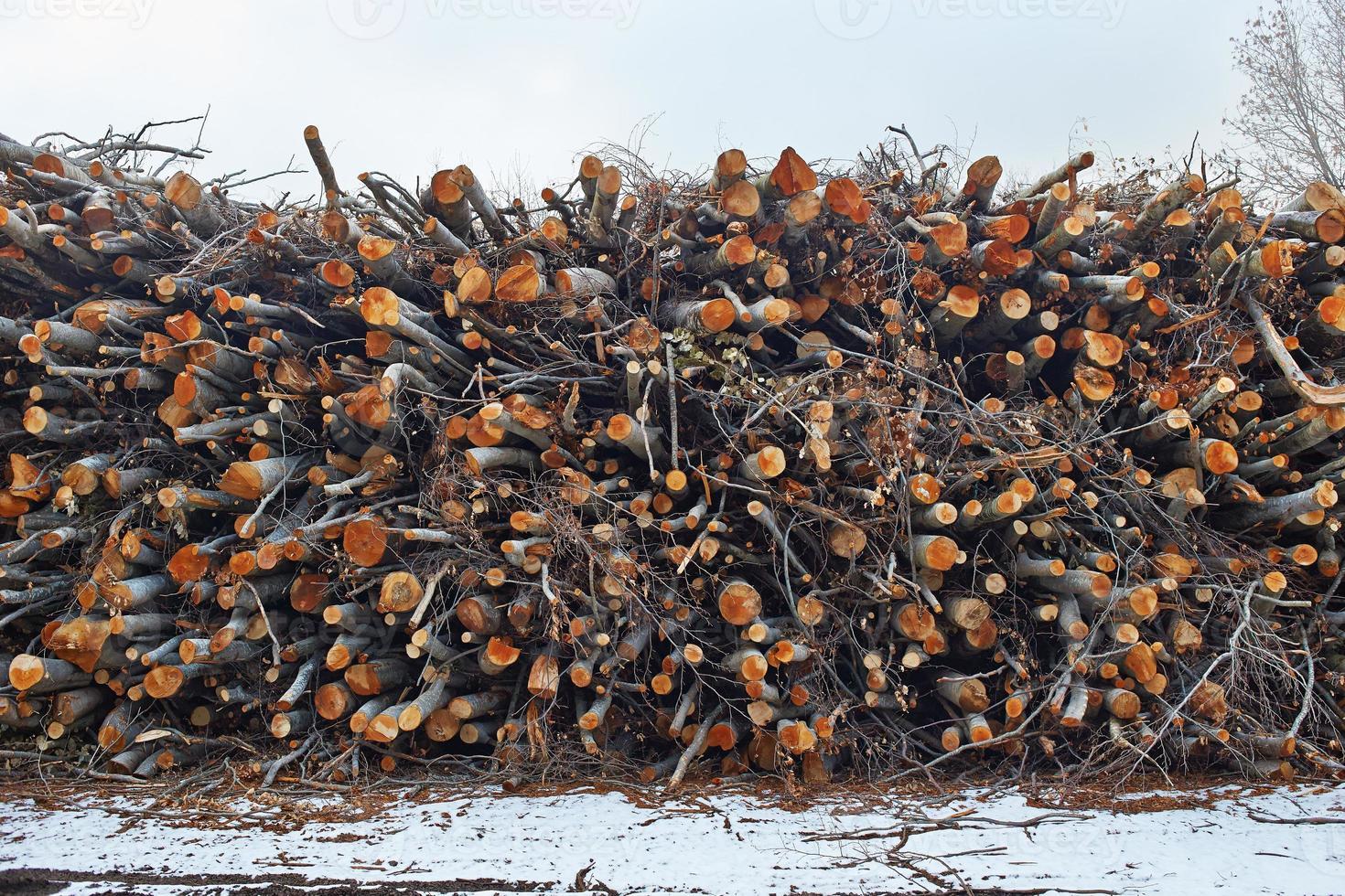 stock stack på skogen foto
