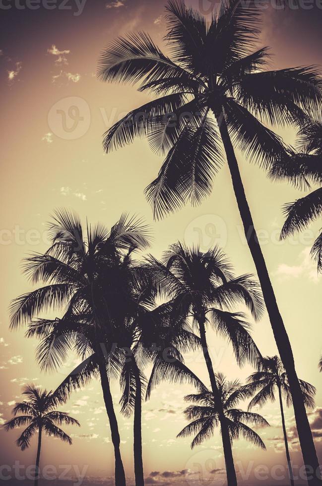 retro sepia palmträd foto