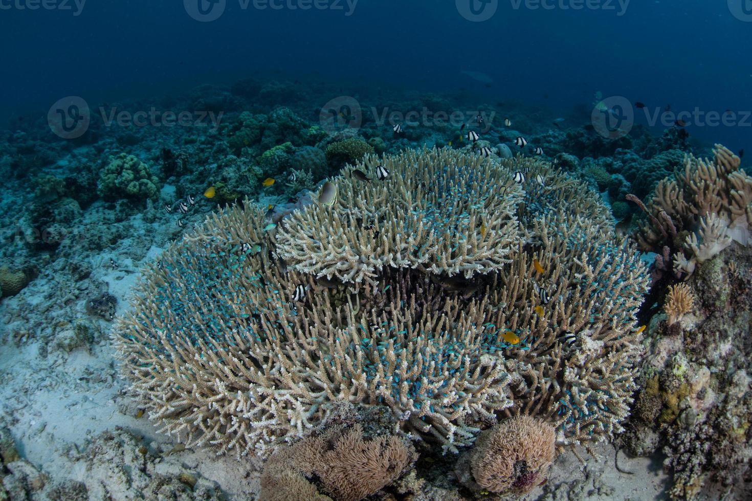 koraller och små fiskar foto