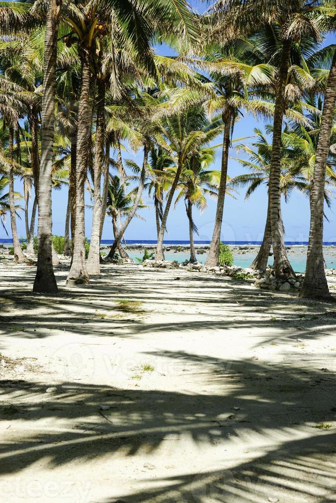 tropiska skuggor. foto