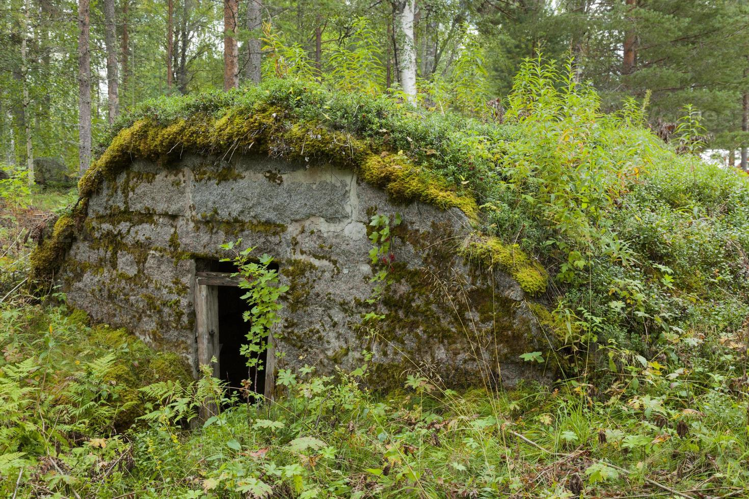erdkeller - gammal bevuxen källare foto