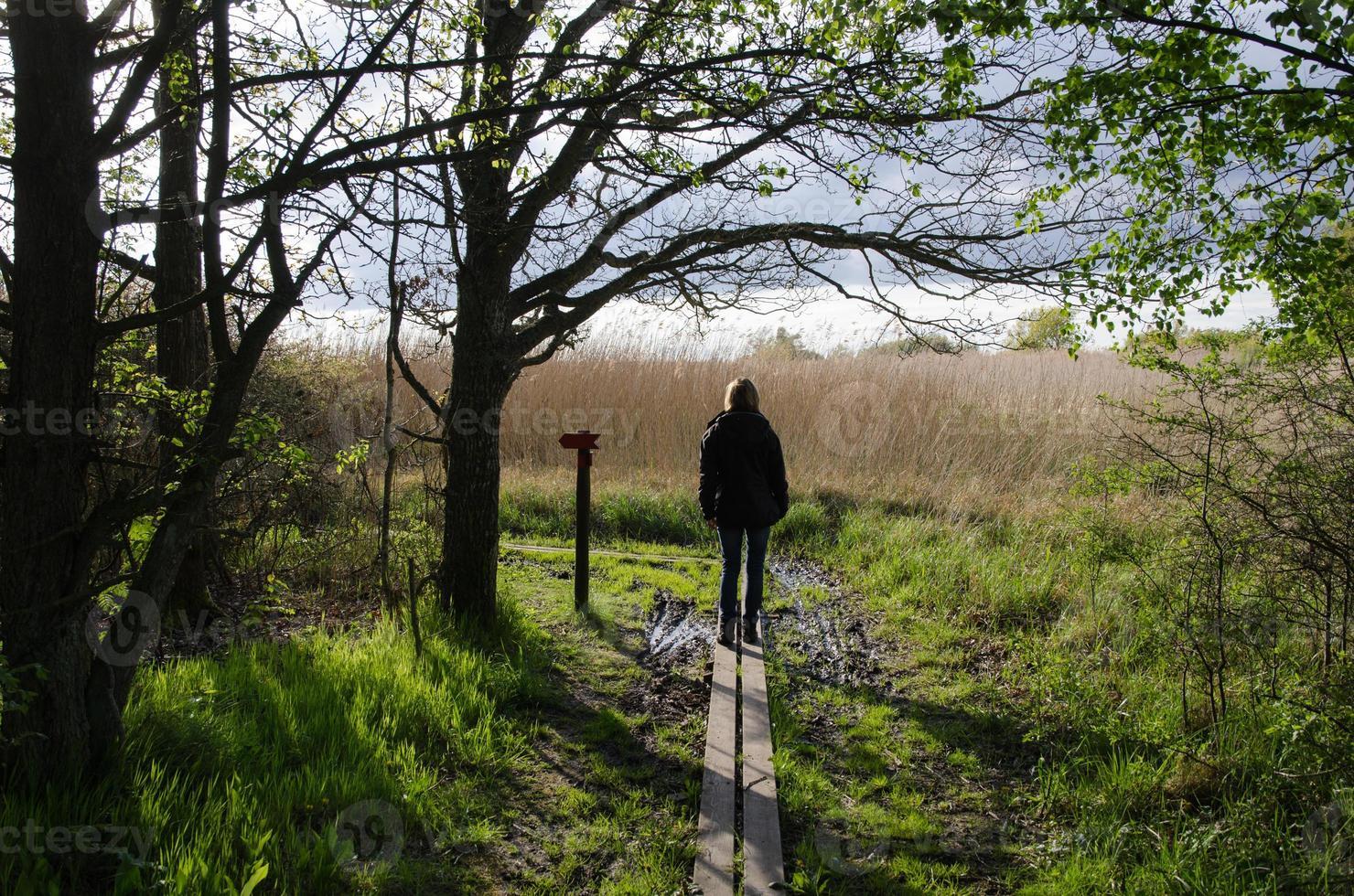 promenader i naturen på våren foto
