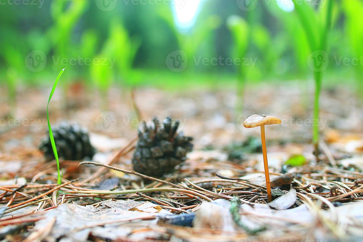 textur moss lav makro svamp foto