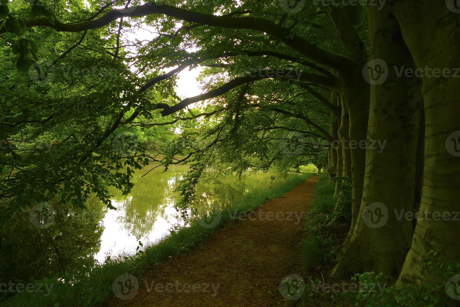idyllisk miljö med trädgårdsväg nära sjön i Sverige foto