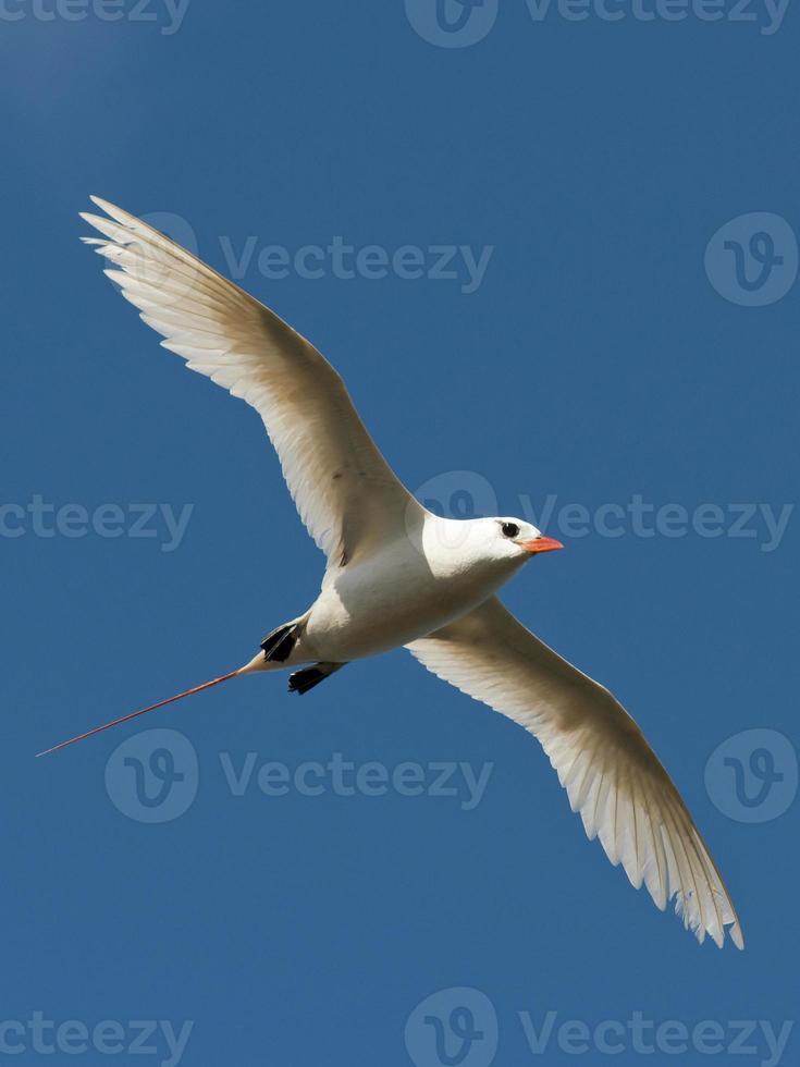 tropisk fågel foto