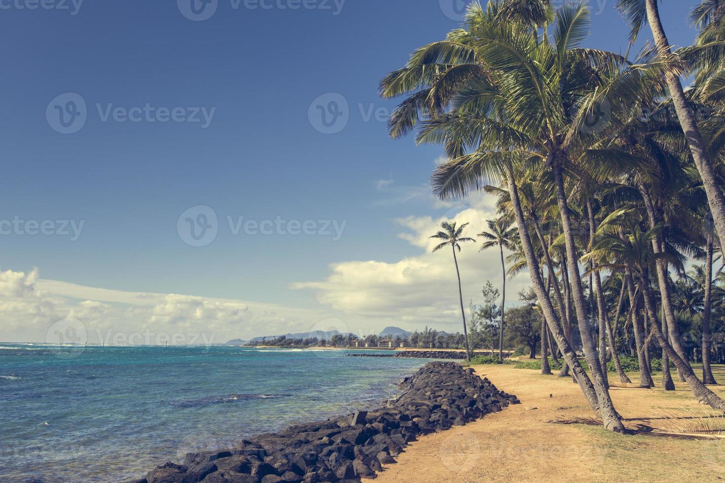 kokosnötpalmträd på sandstranden i kapaa hawaii foto
