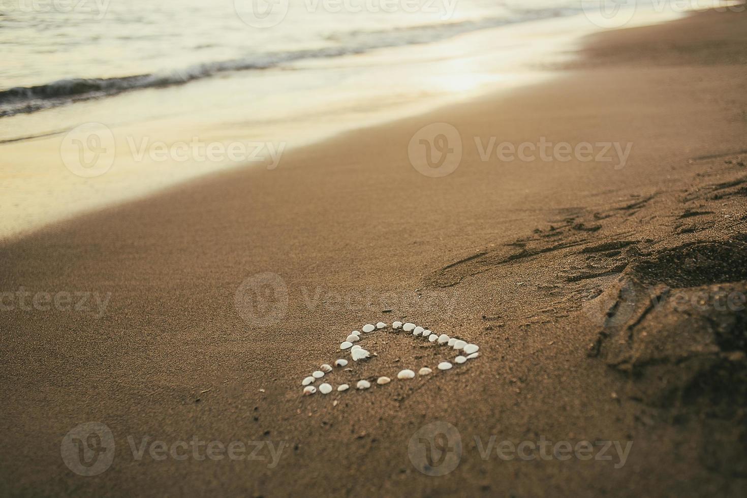 snäckskal hjärtan foto