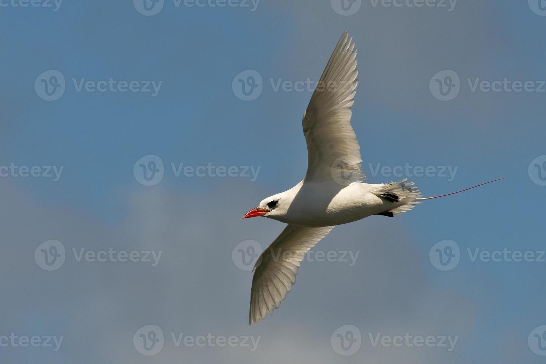 sjöfågel foto