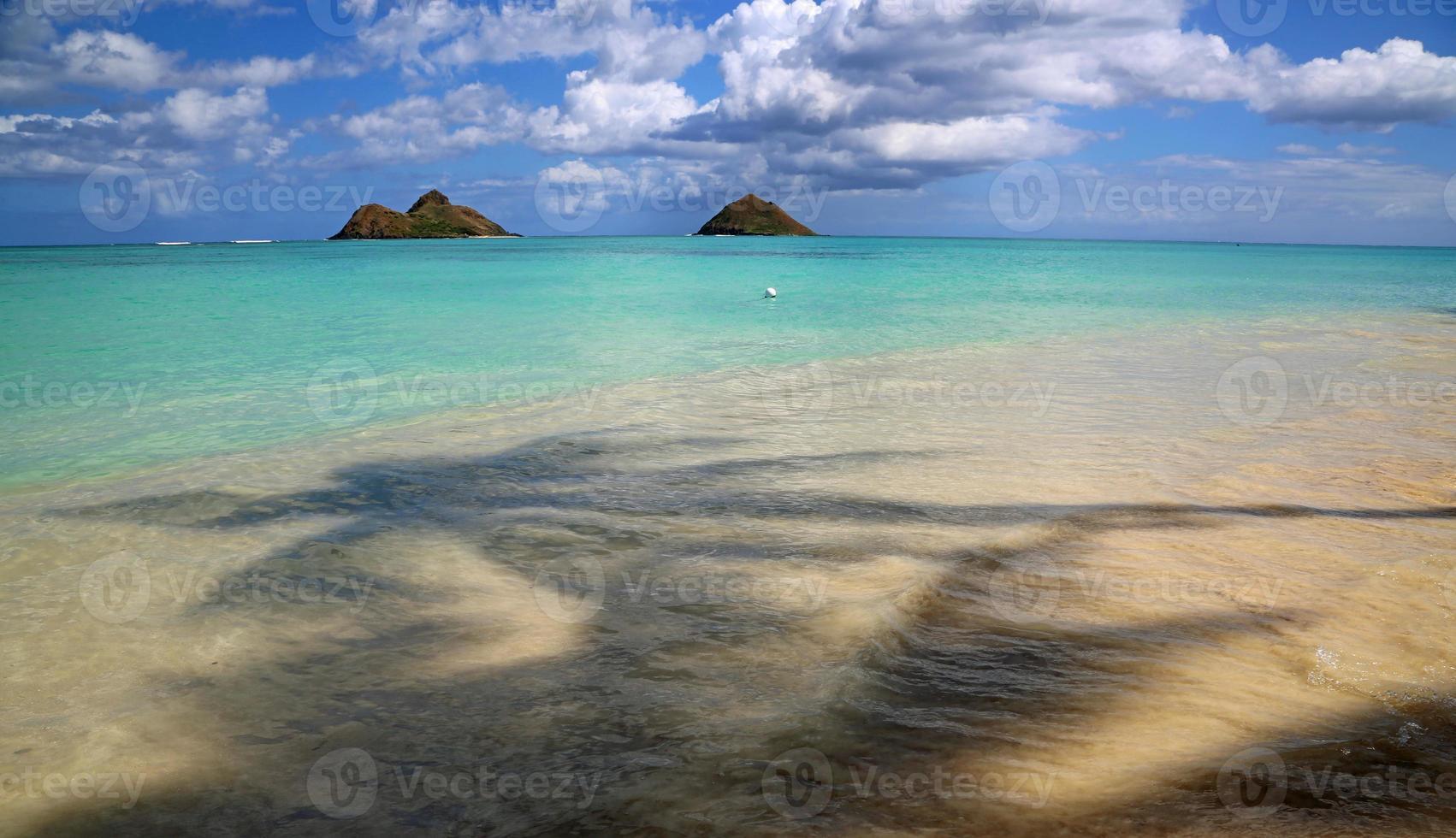 lanikai strand - utsikt från under palmträdet foto