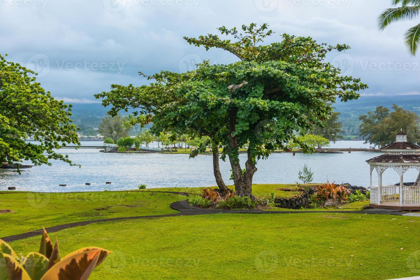 trädet i Hiloträdgården, stor ö foto