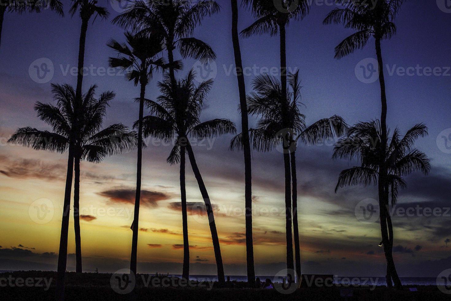 palmen im sonnenuntergang foto