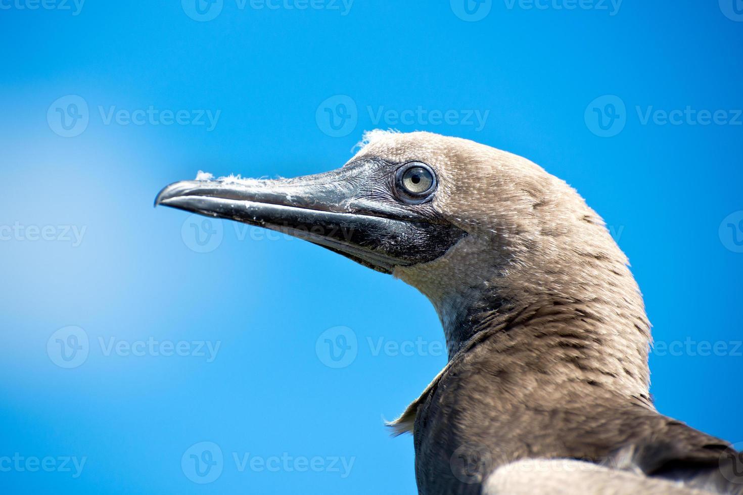 hawaiiansk havsfågel foto