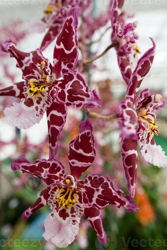 orkidéblomma foto