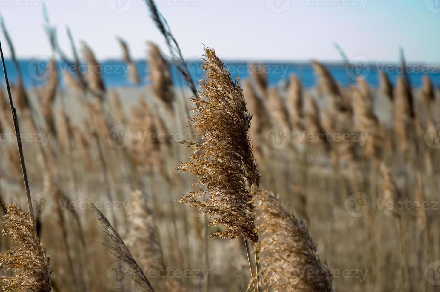 höst hav gräs nära strandlinjen foto