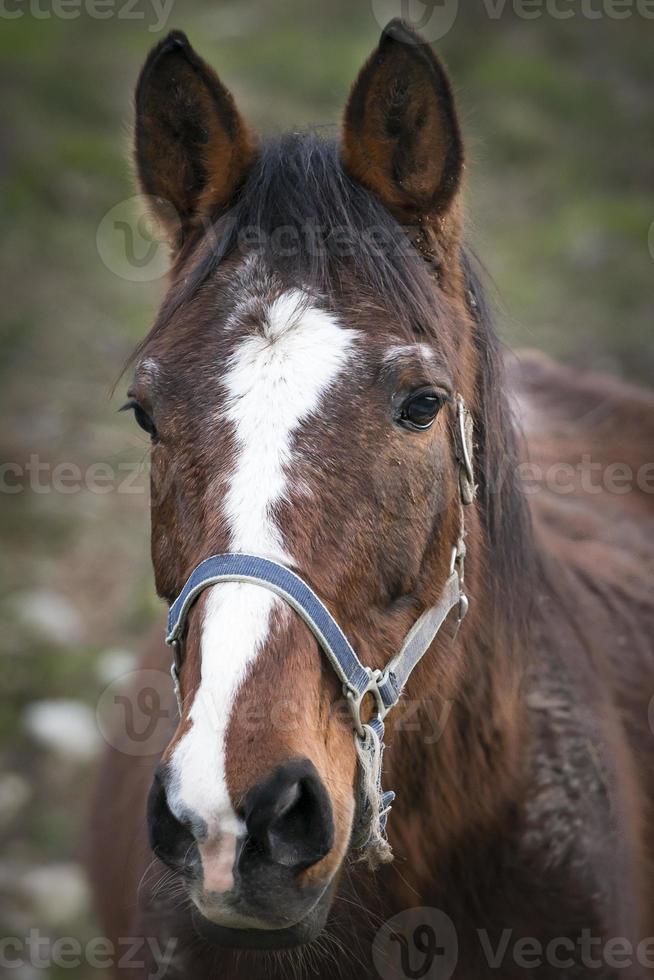 hästens porträtt foto