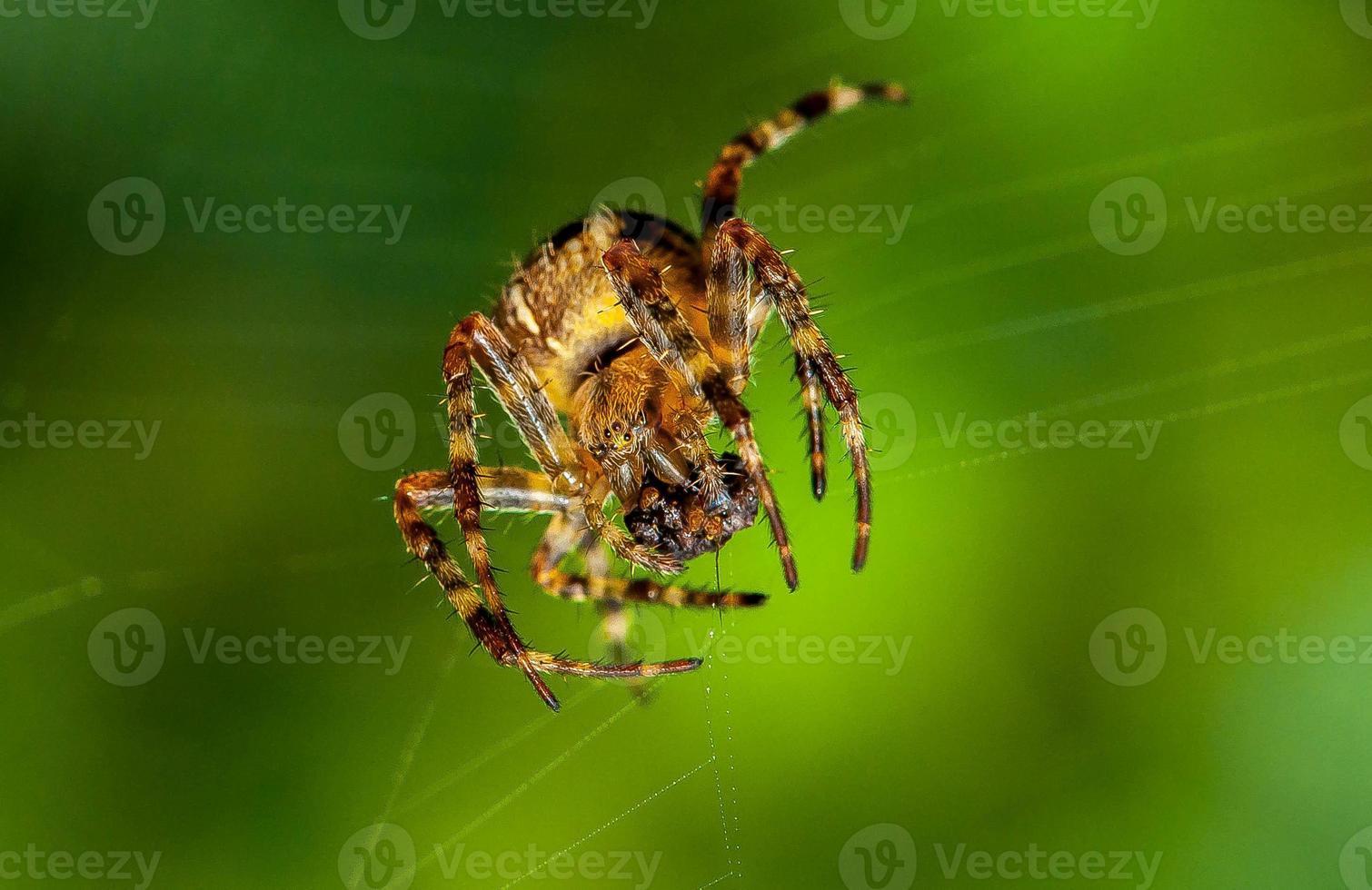 spindel på nära håll foto