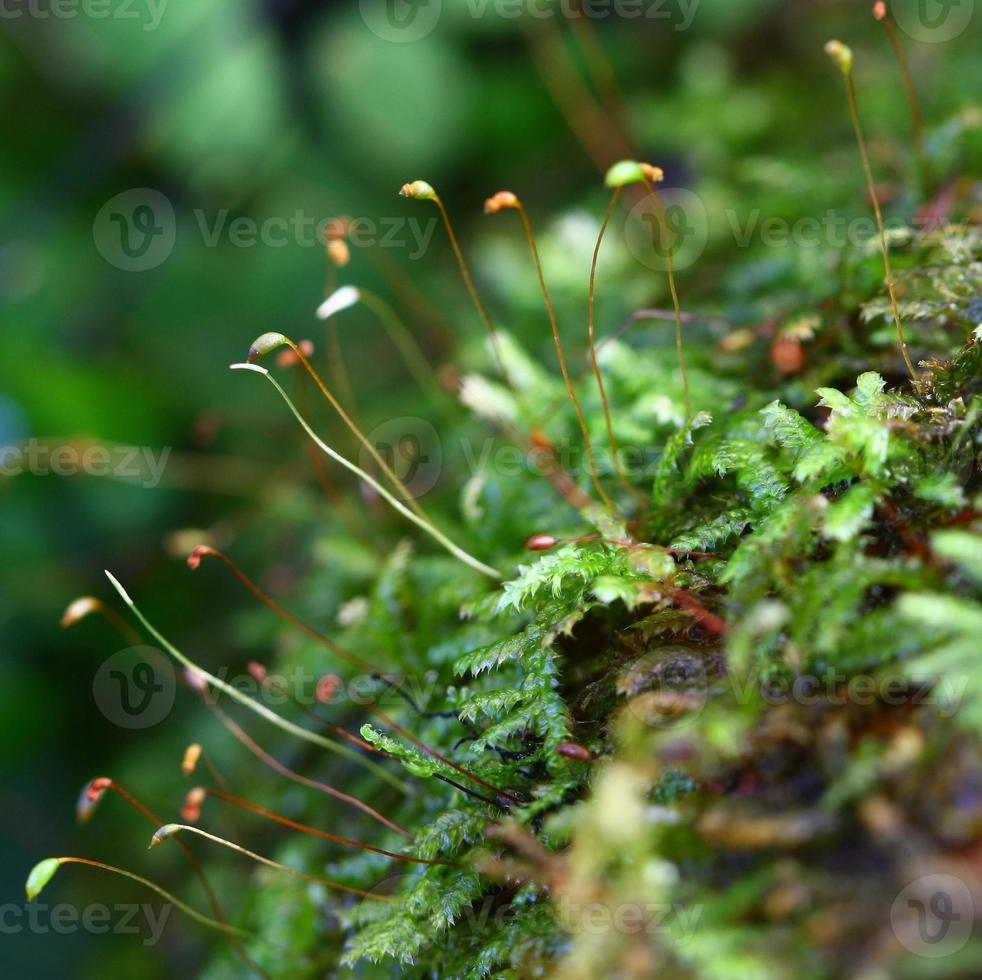 närbild ormbunke och mossa i skogen foto