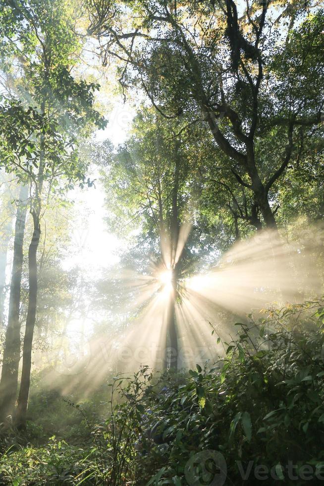 solljus över träd norr om Thaliand foto