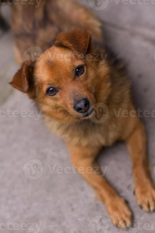 mongrel hund foto
