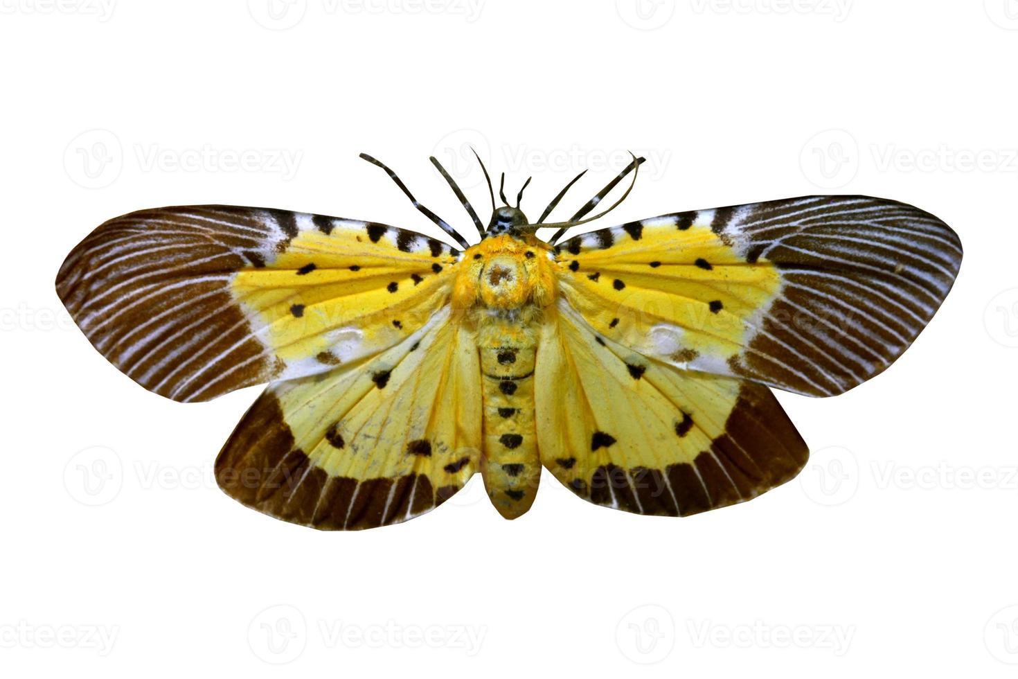 färgglad fjäril isolerad på vitt foto