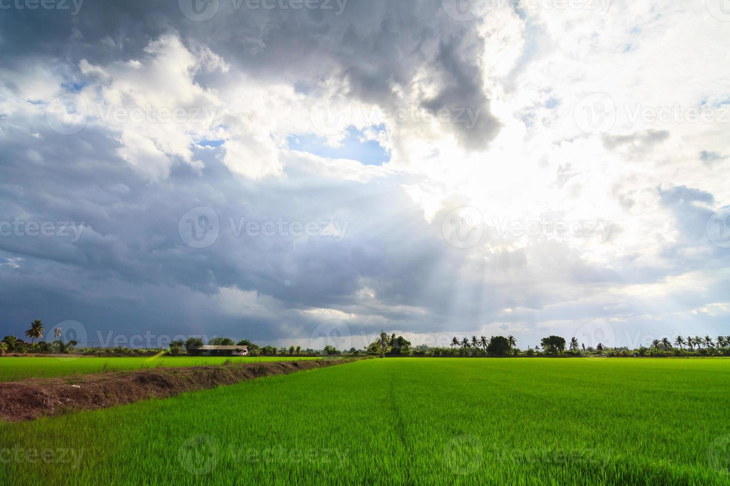 landskap av grönt fält med solstrålar och linsutbländning foto