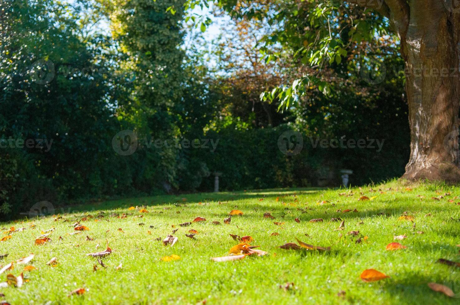 höst trädgård scen foto