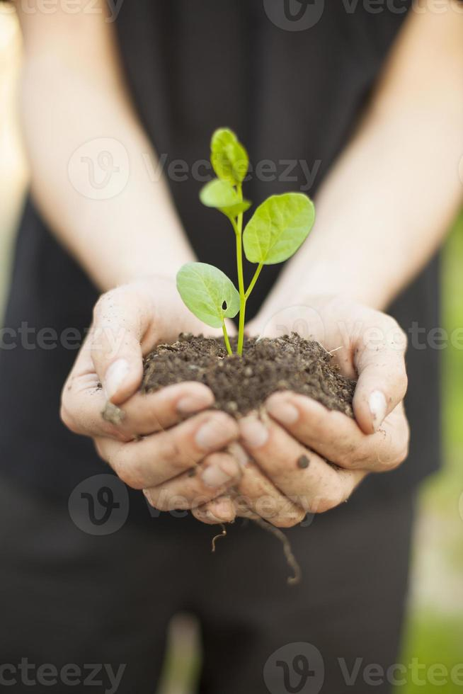 händer som håller seedleng foto
