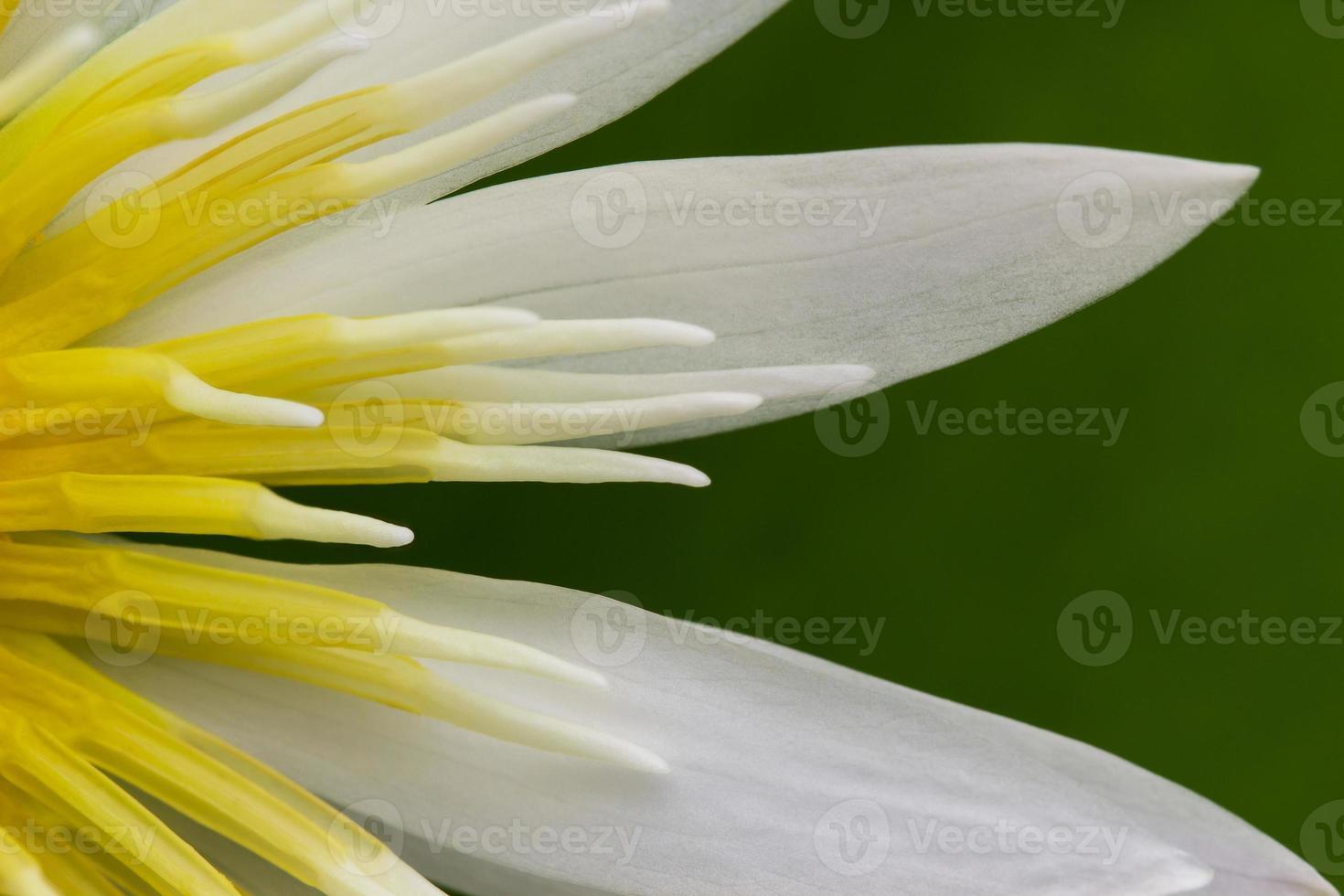 Lotus blomma foto