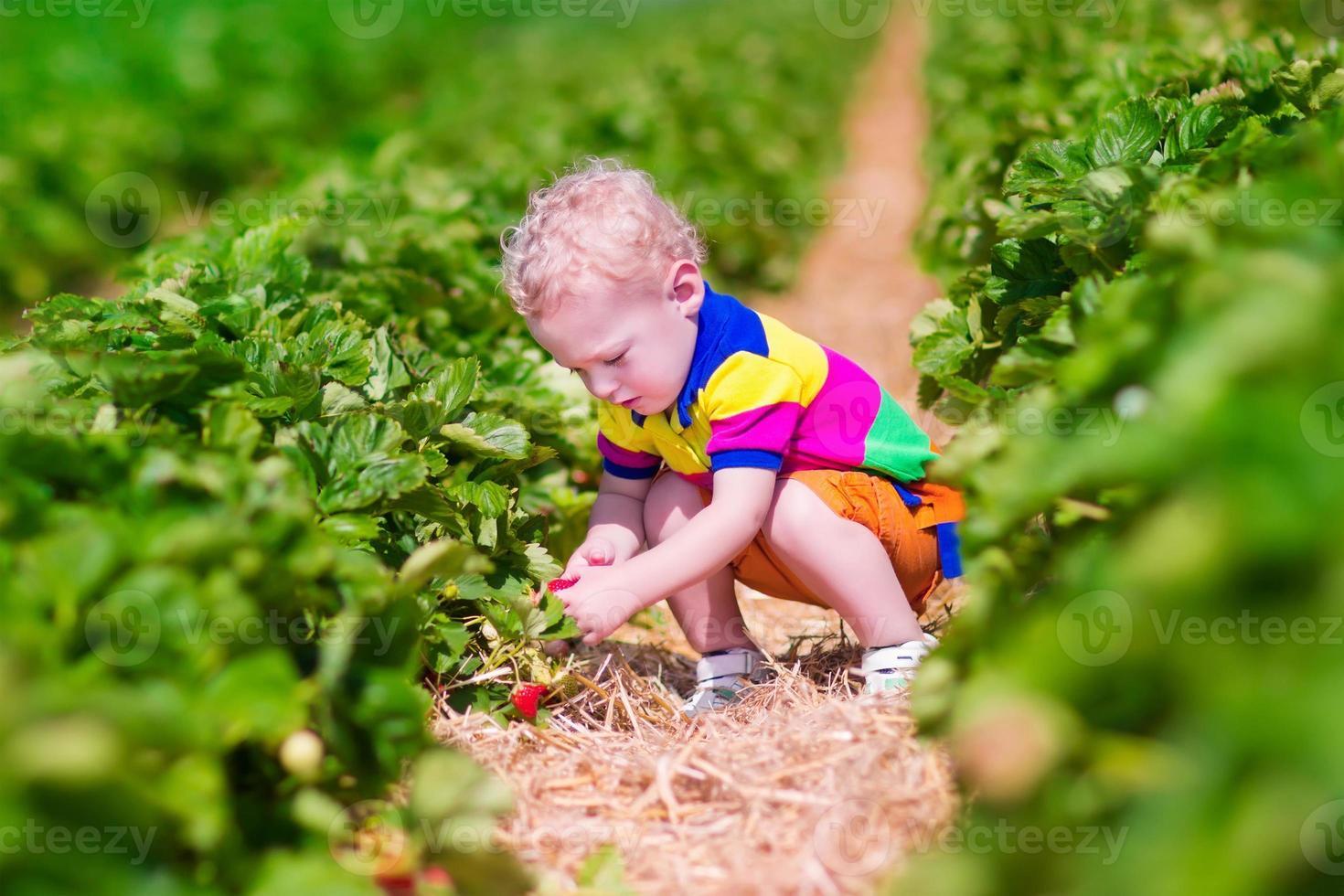 sött barn som plockar färsk jordgubbe på en gård foto