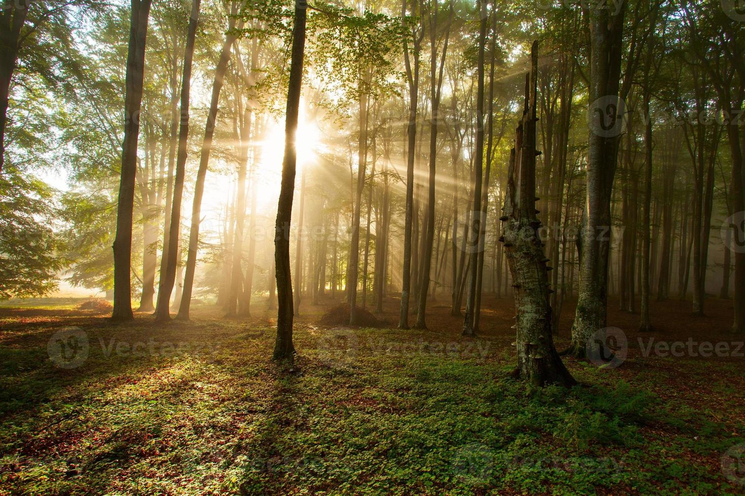 höst skogsträd. natur grön trä solljus bakgrunder. foto