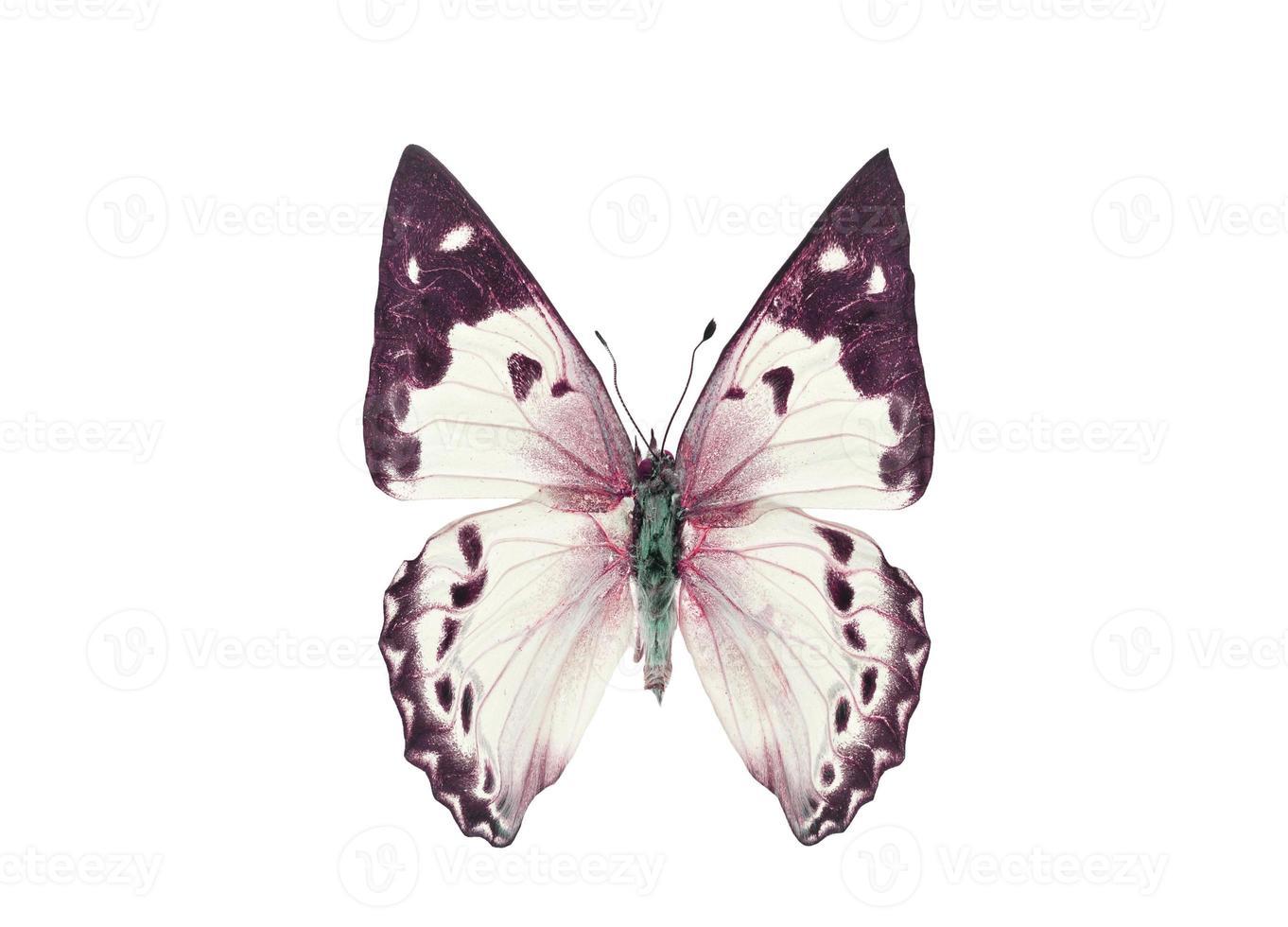 färgglad fjäril. isolerad på vit bakgrund foto