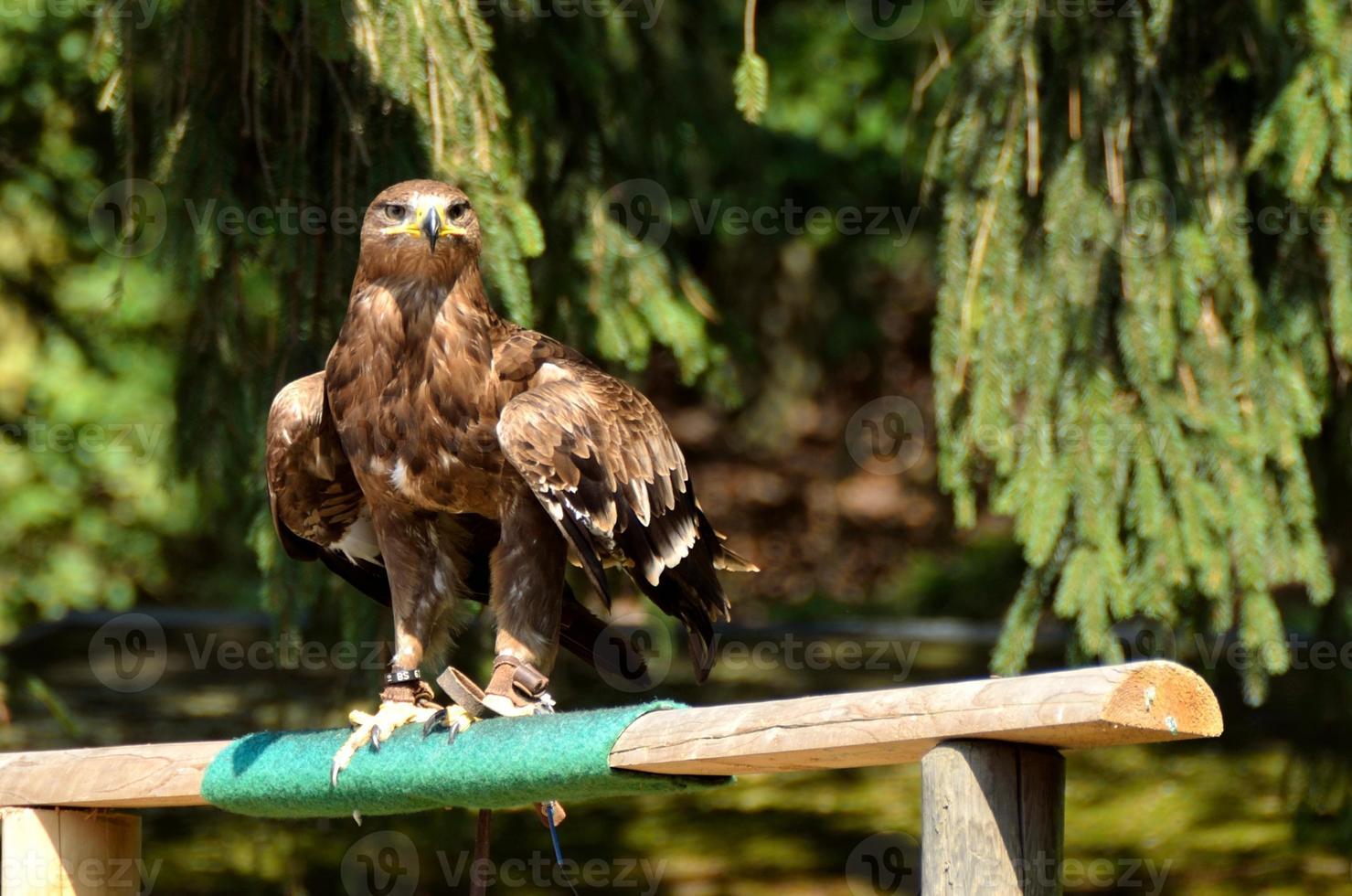 fågel, vogel foto