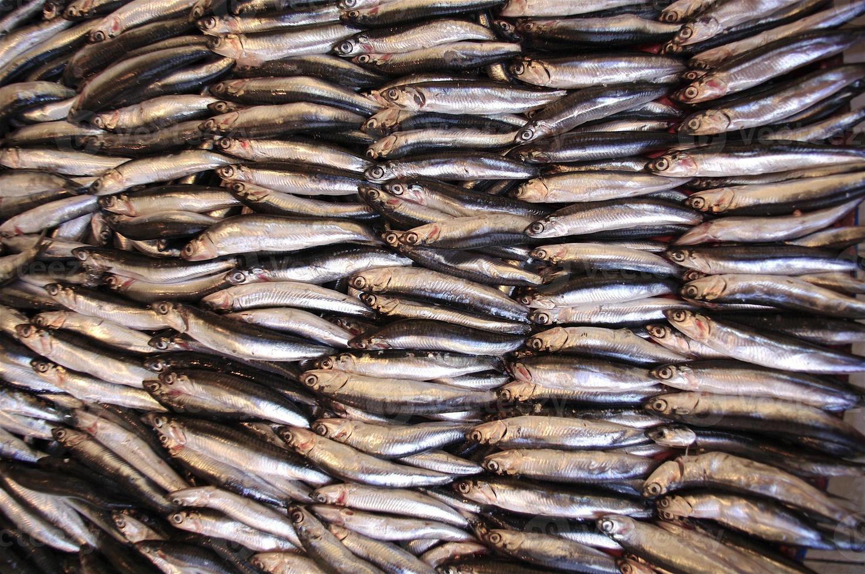 ansjovis fisk redo att laga mat foto