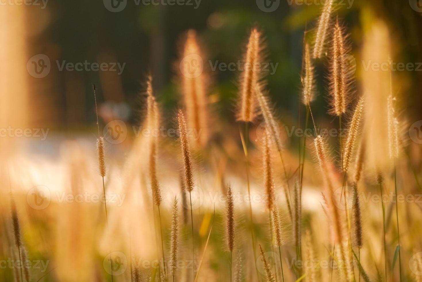 morgonsol som lyser på vilda blommor foto