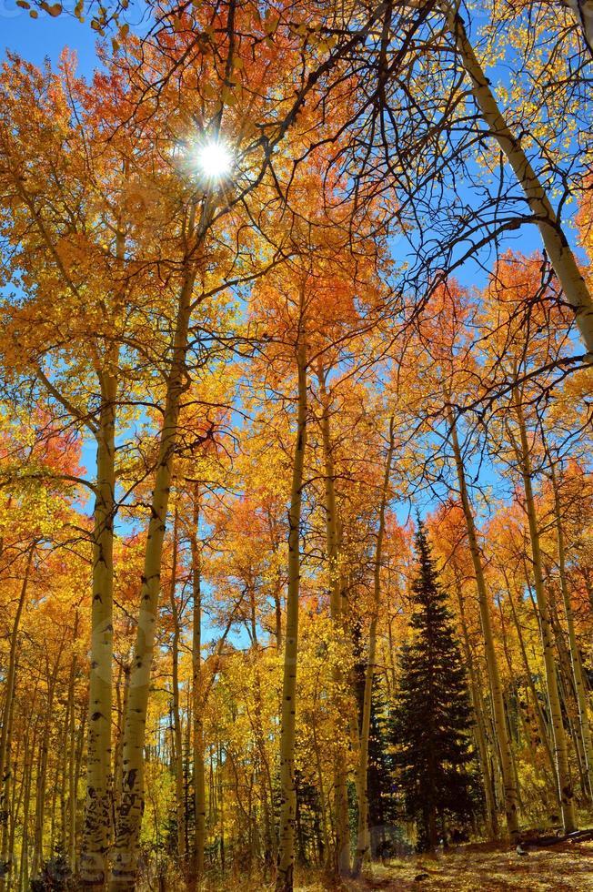 höstsol som skiner genom träden foto