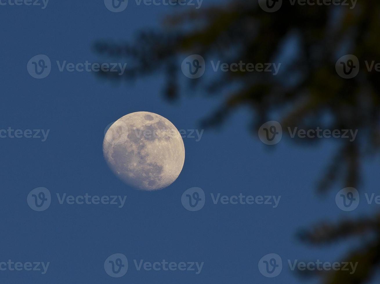 måne i blå himmel foto