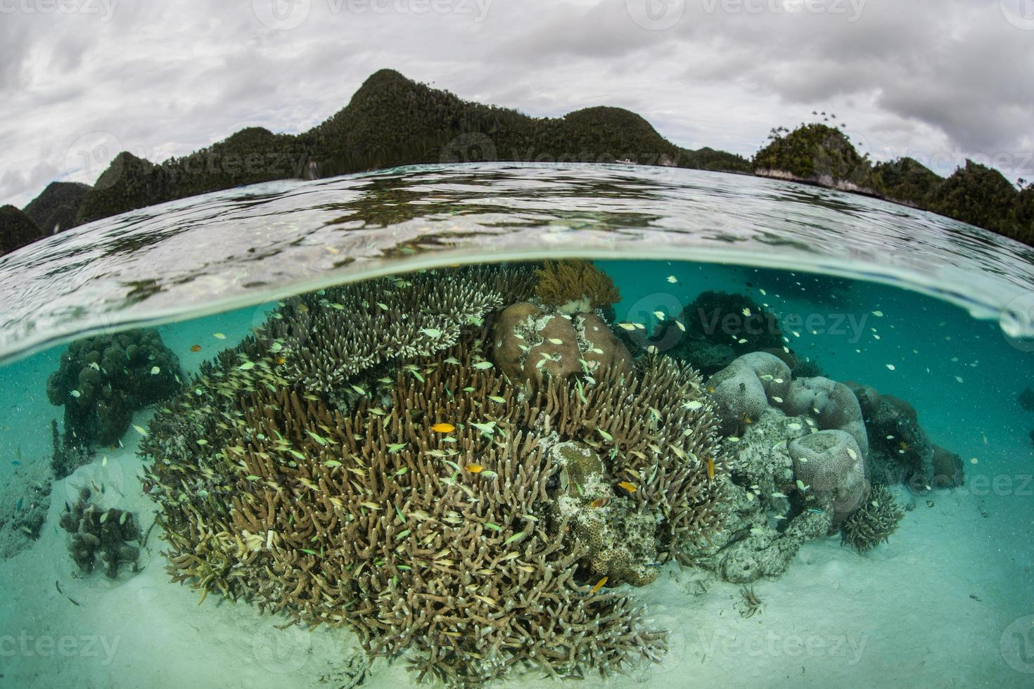 korallrev i lagunen foto
