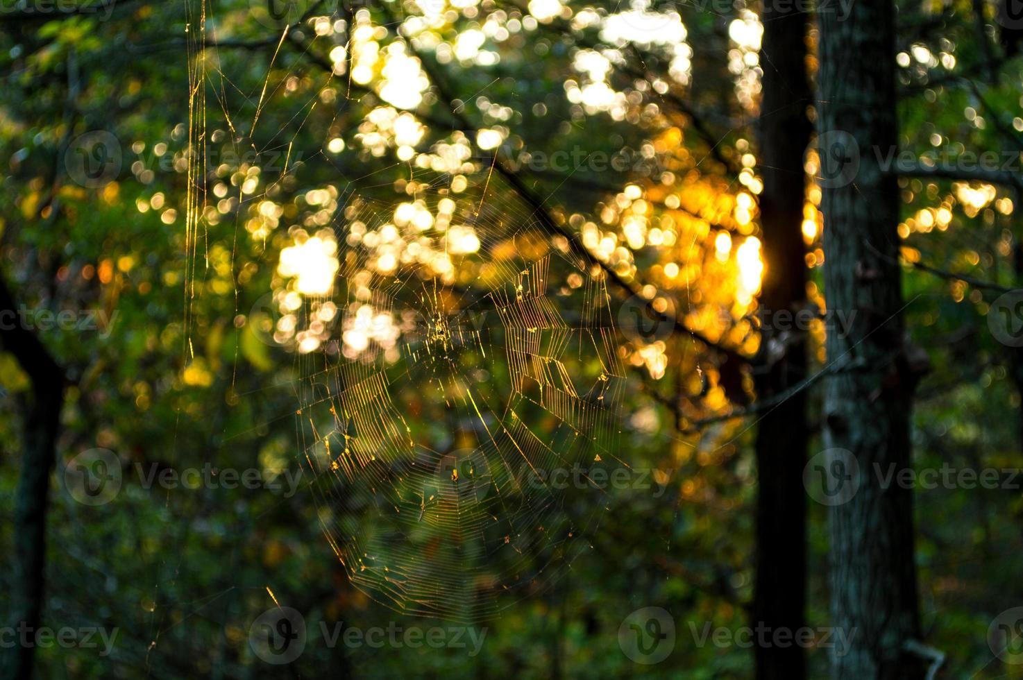 spindelnät bakgrundsbelyst av solnedgången foto