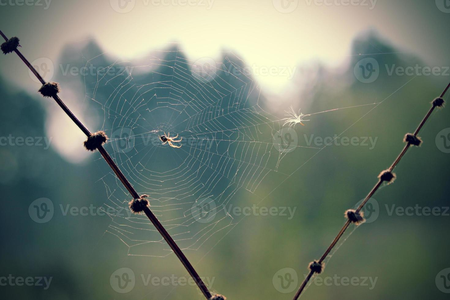 spindel i ljuset foto