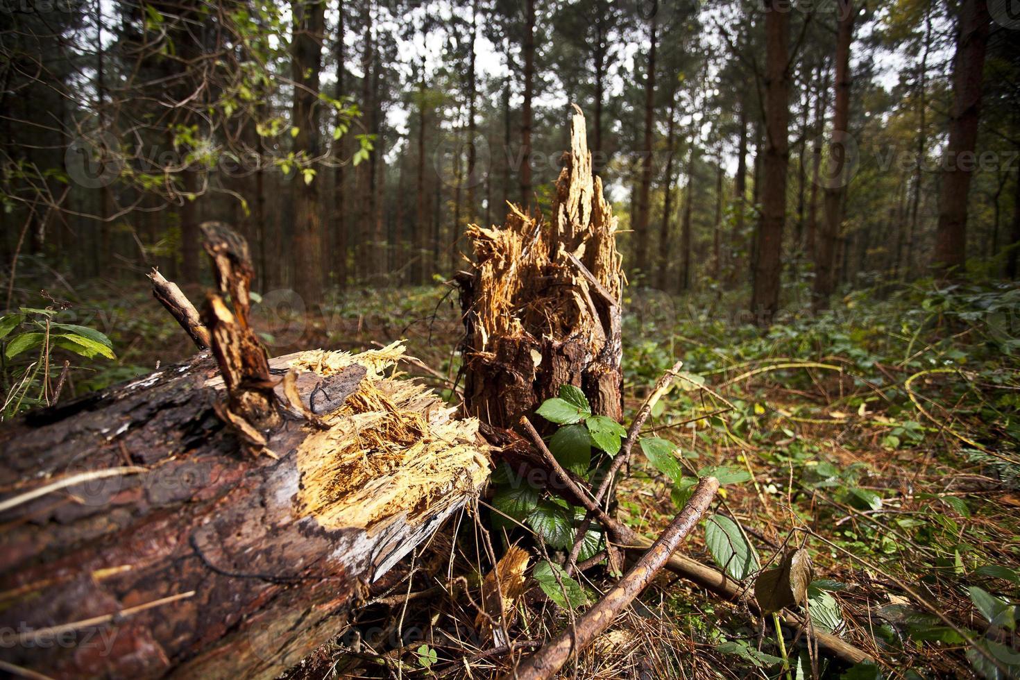 fallet träd foto